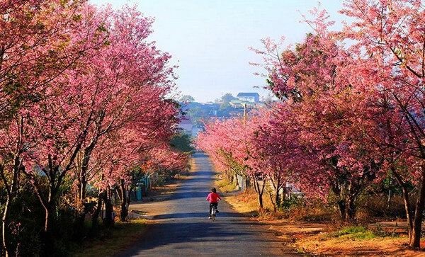 Địa điểm du lịch nổi tiếng tại Đà Lạt